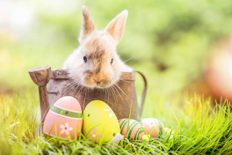 easter eggs and bunny